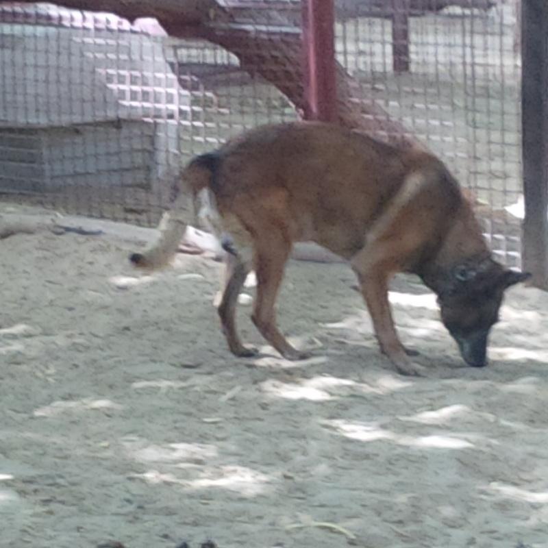 Cwd Dog Adoption